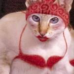 painted-cat (26)
