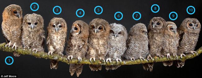 10 Owls
