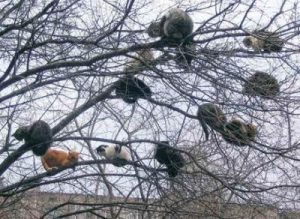 lots-of-cats-in-a-tree1